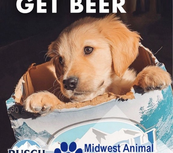 Busch gives 3 months' worth of beer to people who adopt a dog duringPANDEMIC